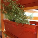 How-to: Indoor Herb Garden