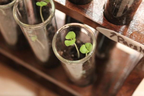 How-to: Test Tube Garden