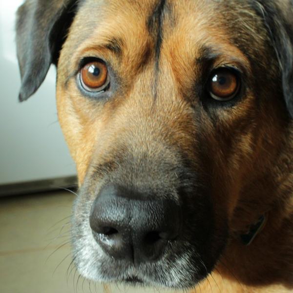 My Dog, Woodrow | HandsOccupied.com