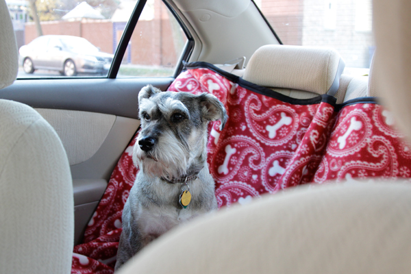 How-to: Back Seat Pet Protector | Hands Occupied