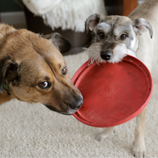 Holiday Gifts for Pets and What Not to Buy at Hands Occupied