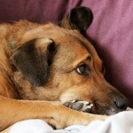 5 Ways to Combat Dog Cabin Fever
